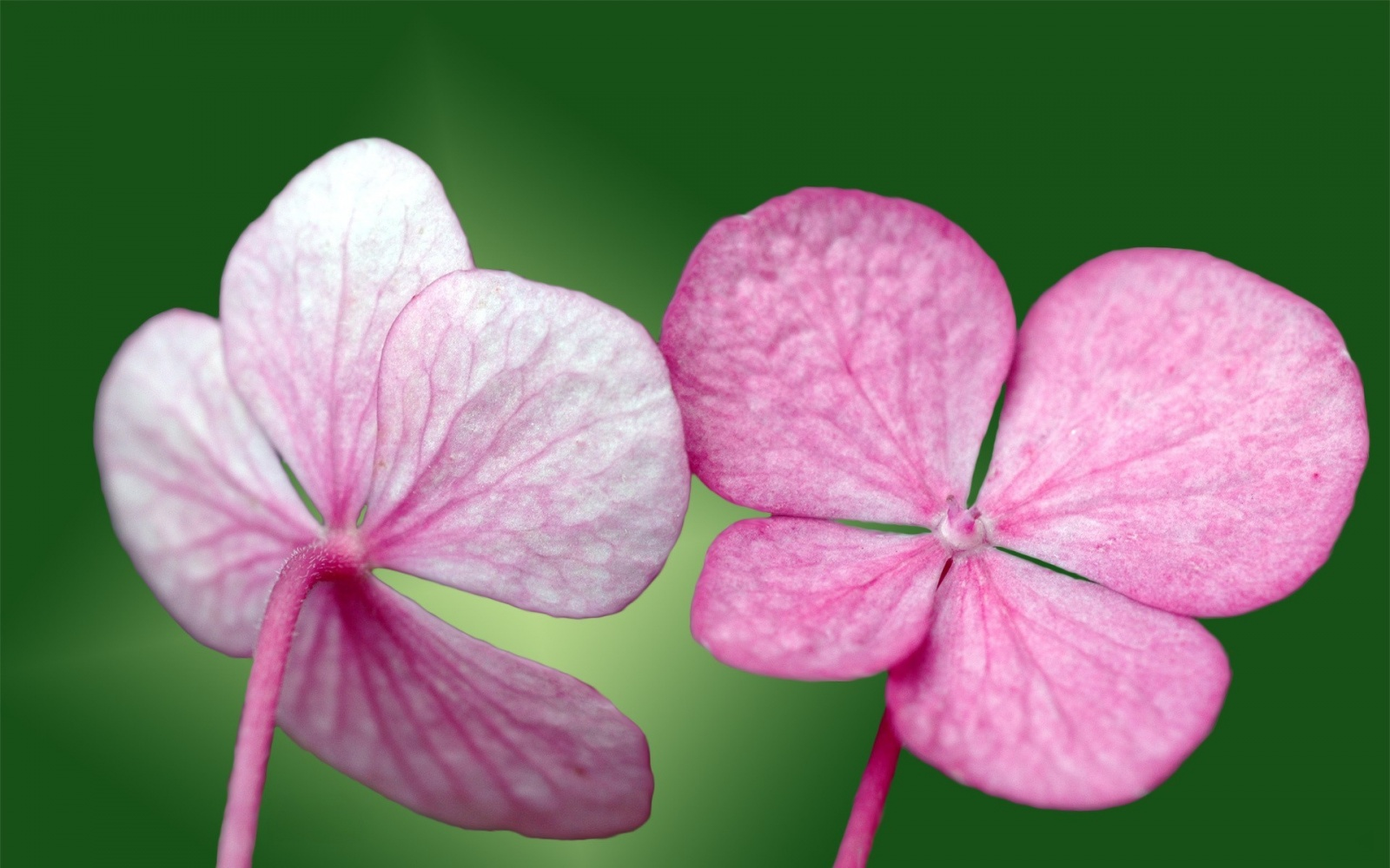 Pink Small Flowers Wallpapers   9418 1600x1000