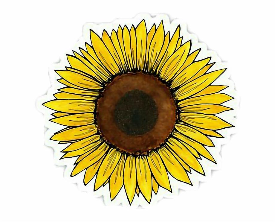 Clipart Wallpaper Blink   Aesthetic Sunflower Sticker HD Png 920x742