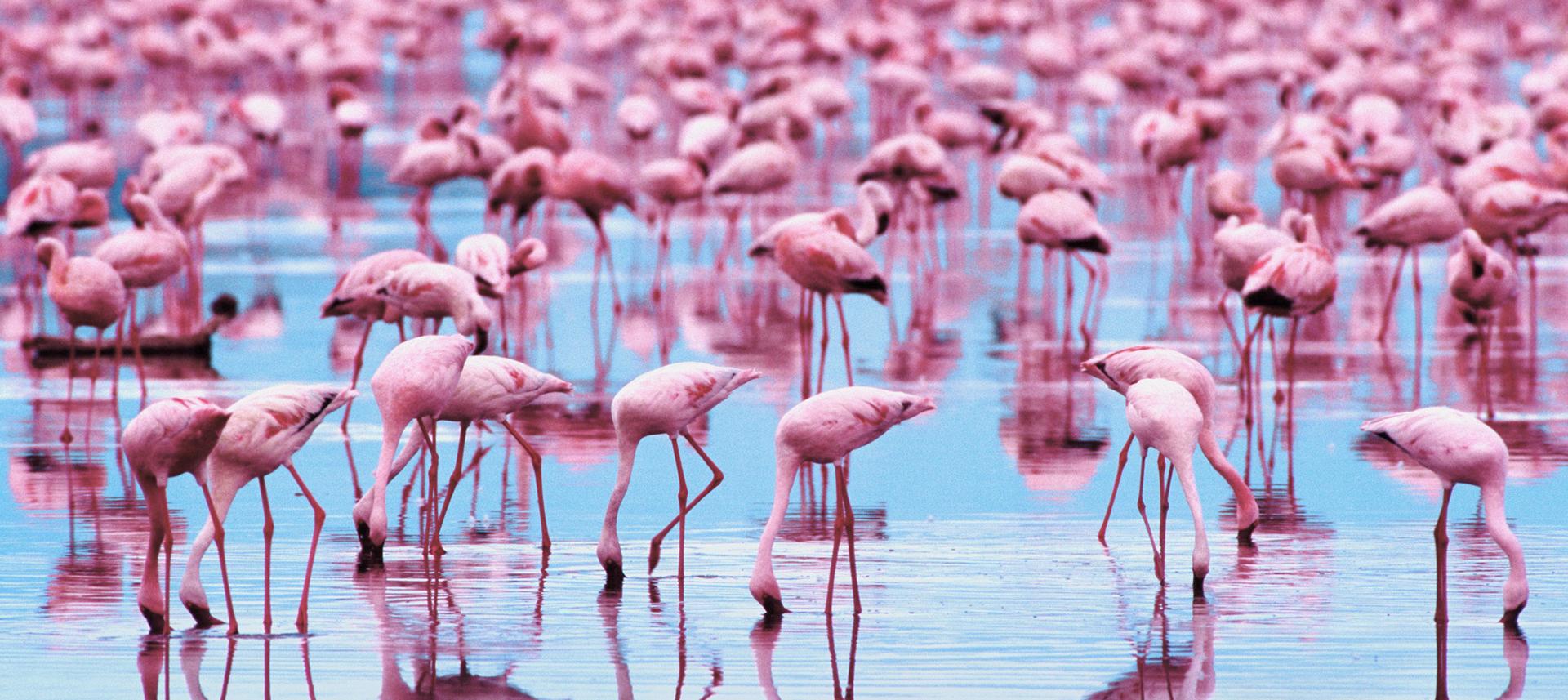 Free Download Flamingo Wallpaper Wallpapers Hd Desktop
