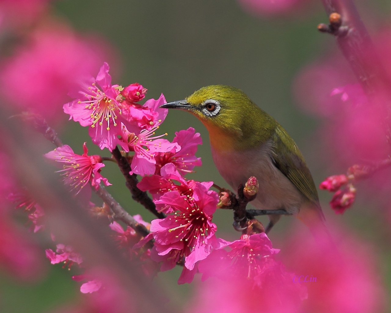 flowers and birds wallpaper which is under the birds wallpapers 1280x1024