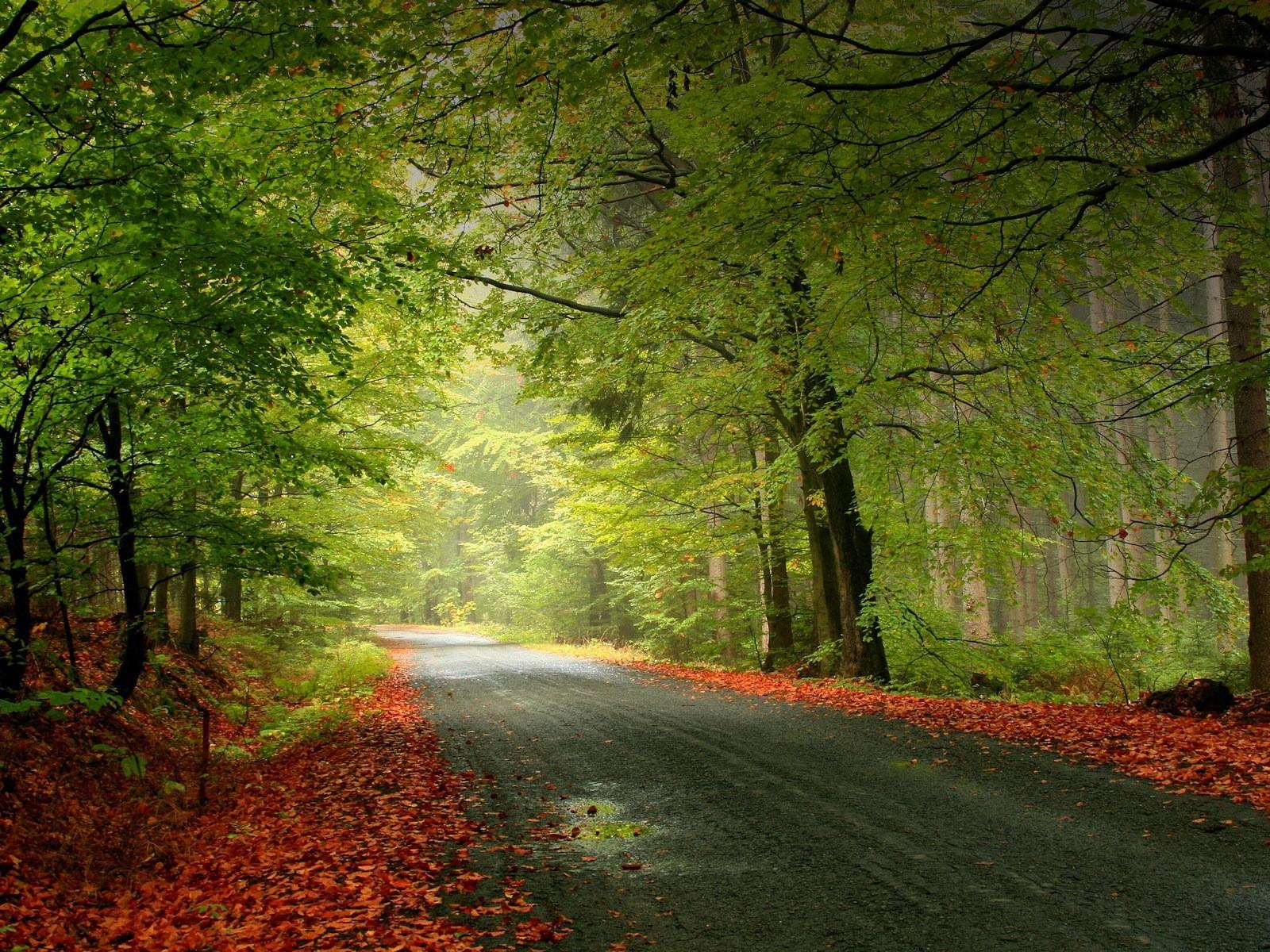 free desktop wallpapers autumn hd wallpaper background