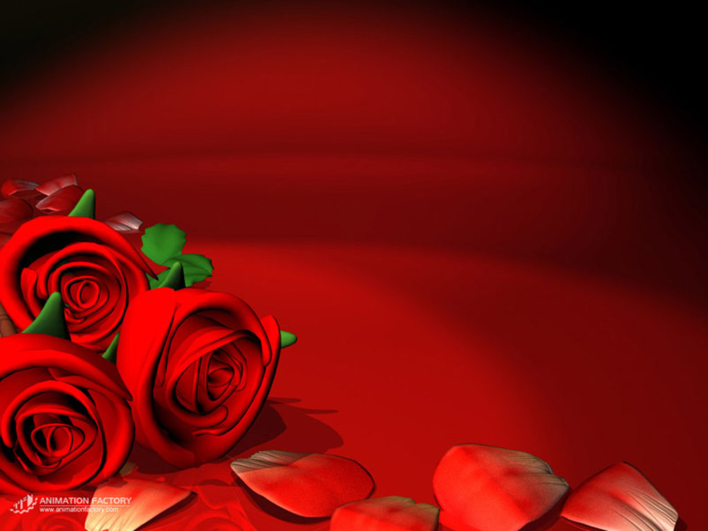 Red Roses Love Wallpapers And Backgrounds Seen On wwwdil ki dunyatk 1024x768