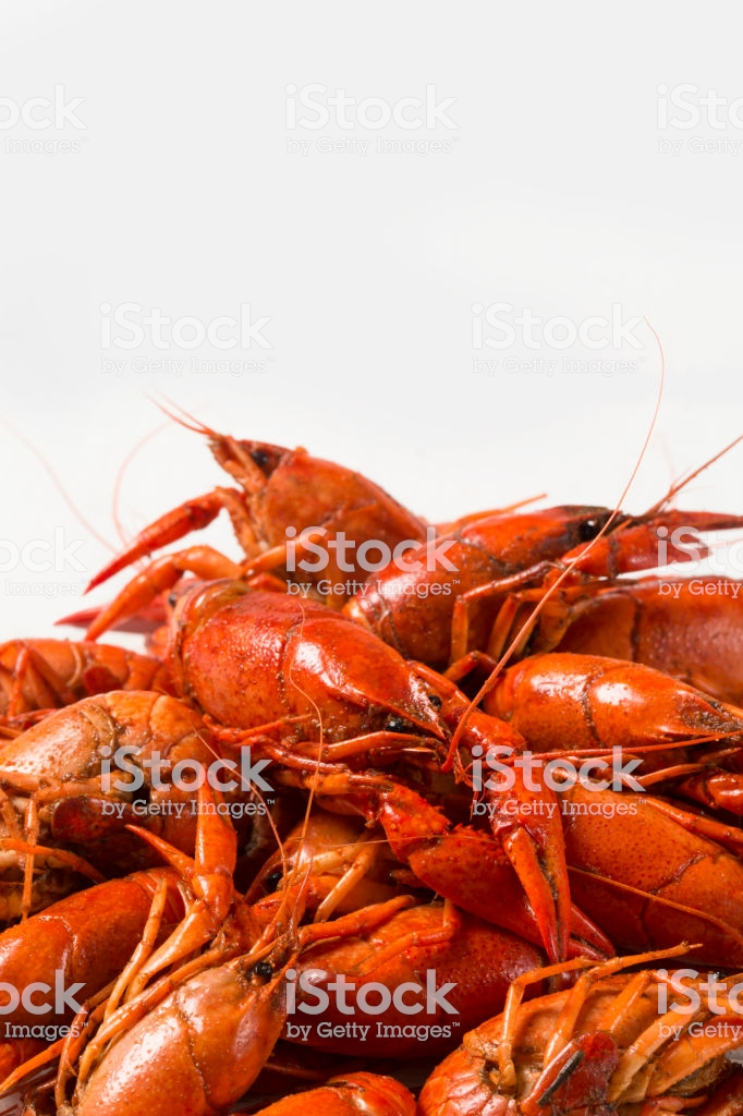 Boiled Crawfish On A White Background Stock Photo   Download Image 682x1024