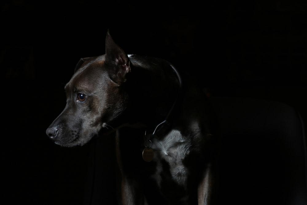 Black Dog Pictures Download Images Stock Photos on Unsplash 1000x667