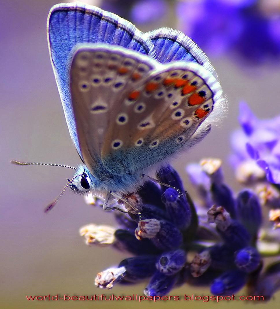 Beautiful Wallpapers Beautiful Butterflies Wallpaper 969x1067