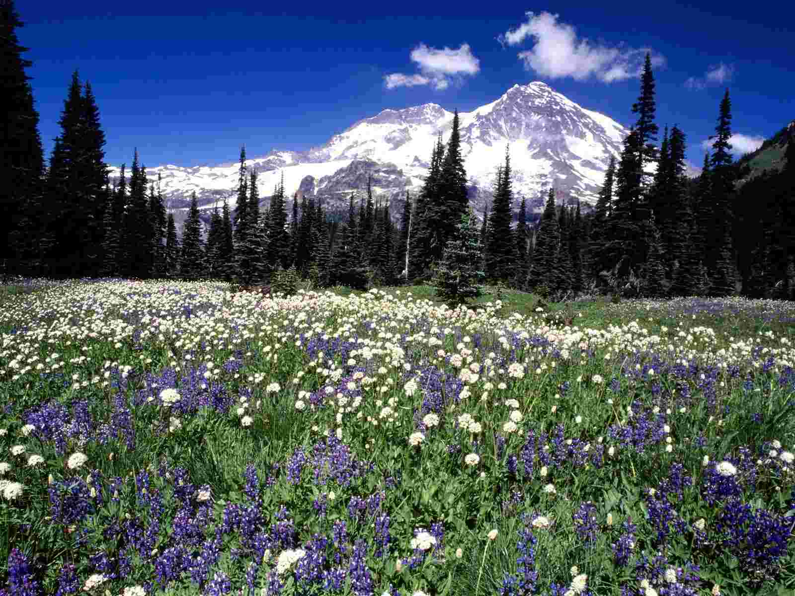 Seasonal Beauty Mount Rainier Washington wallpaper 1600x1200