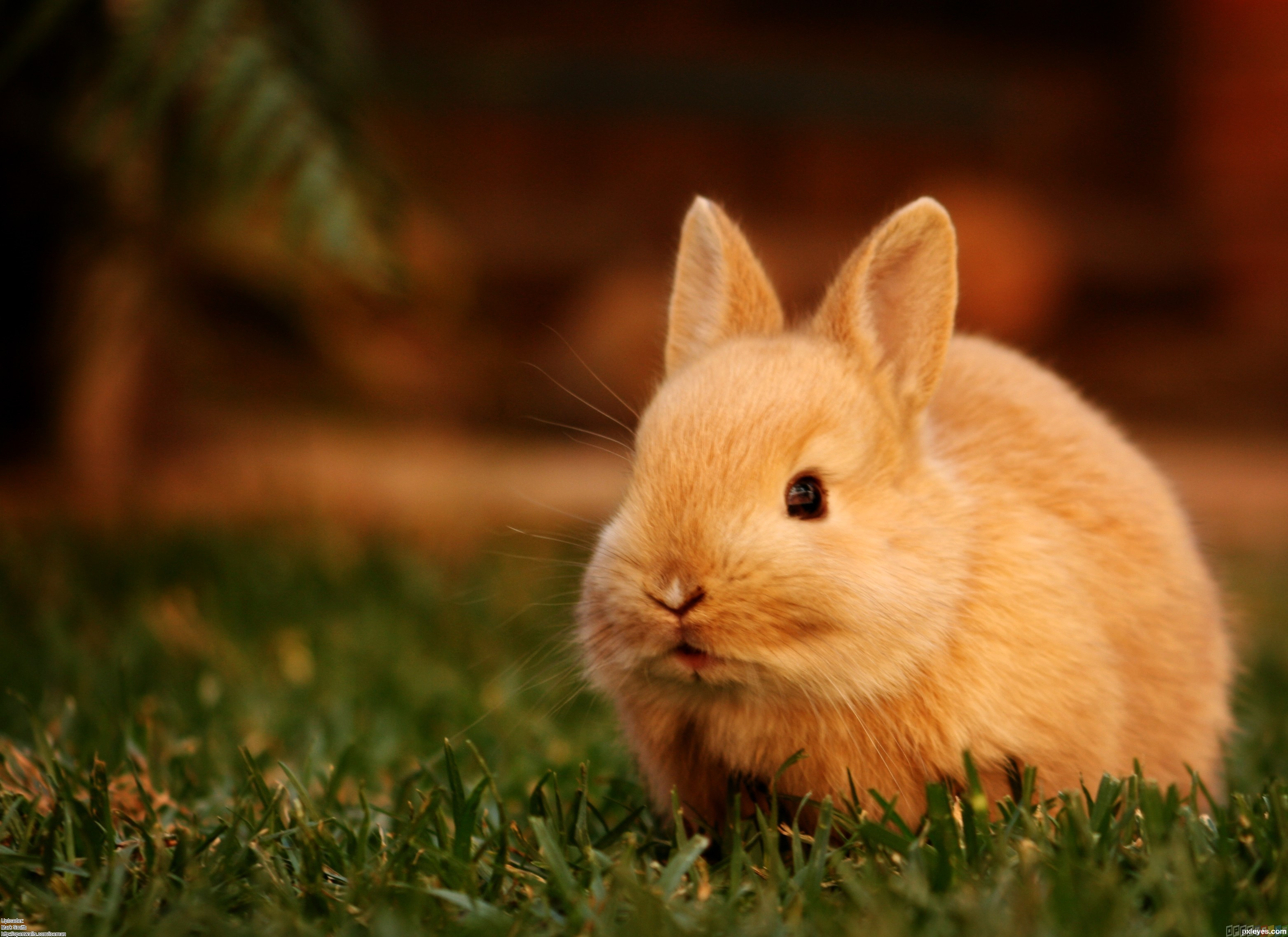 cuteness wallpaper cute little bunny wallpaper hd 3420 wallpaper 3126x2274
