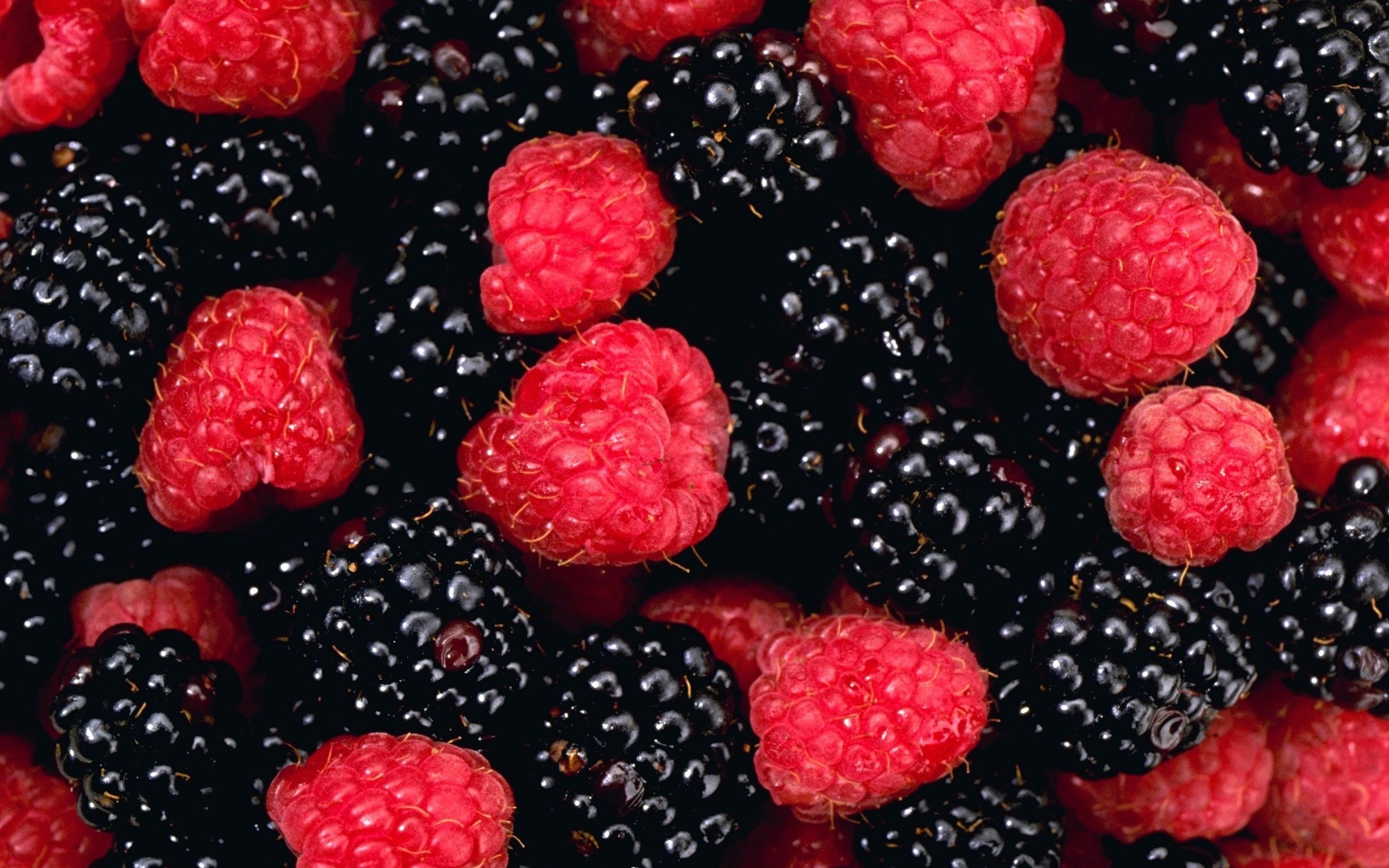 Download Blackberry Fruit Wallpaper HD Photos pictures in high 2560x1600
