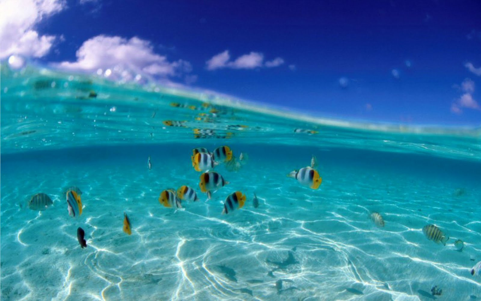 Beaches The Most Beautiful Nature Of World D Tropical Fish 121824 1600 1600x1000