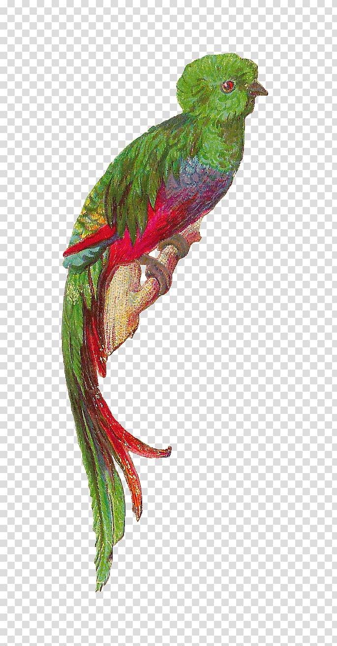 Bird Resplendent quetzal Feather Cute Quetzal transparent 685x1311