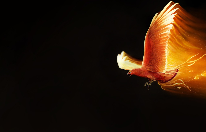 Wallpaper Minimalism Bird Fire Wings Background Fantasy 1332x850