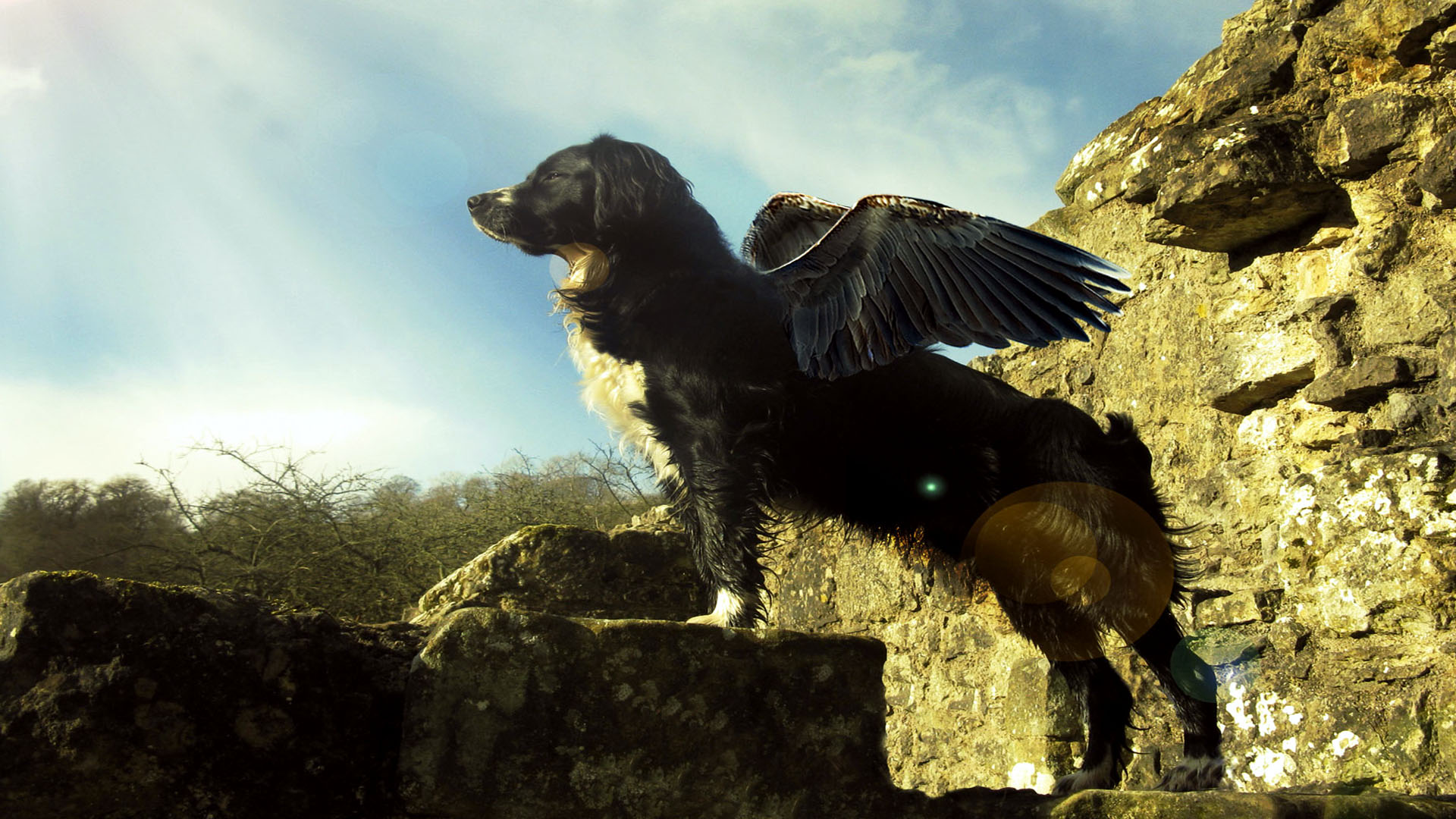 Flying Dog Cool Awesome 2 Wallpapers HD 1920x1080