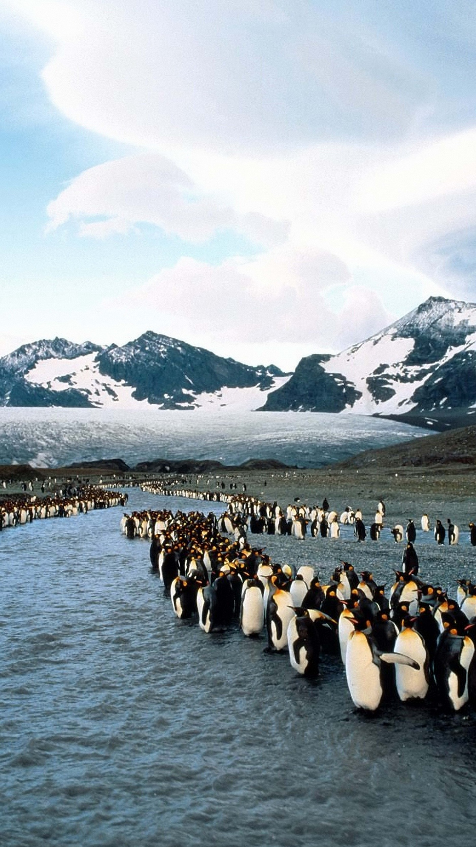 Download wallpaper 938x1668 penguins north mountains flock 938x1668