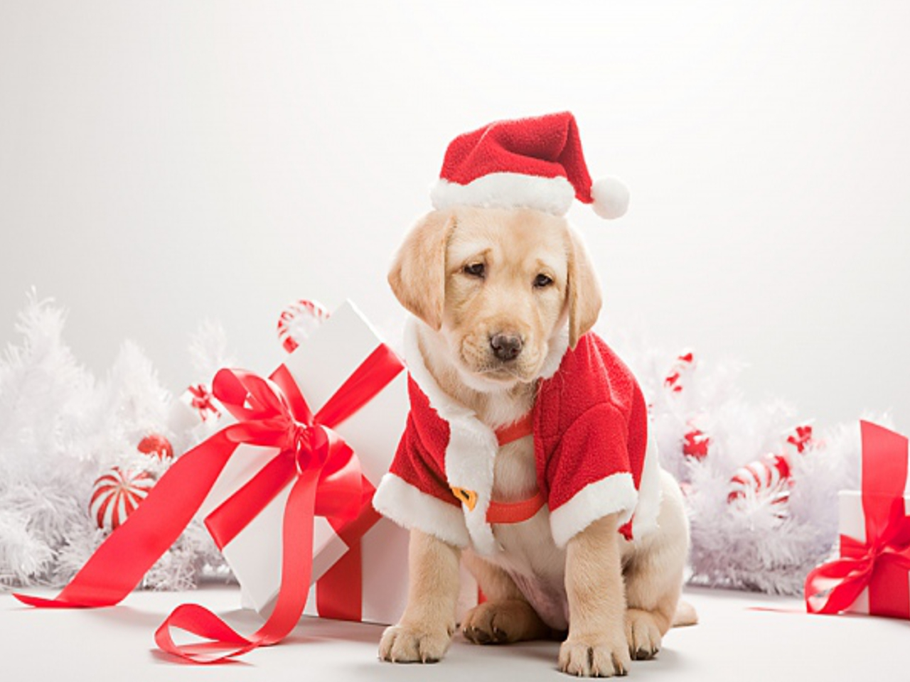 christmas dog wallpaper 2015   Grasscloth Wallpaper 1280x960