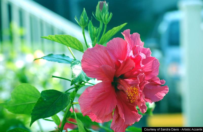 All photos gallery flower wallpaper flowers wallpaper 800x522
