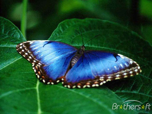 Download Living Butterfly Screensaver Living Butterfly 640x480
