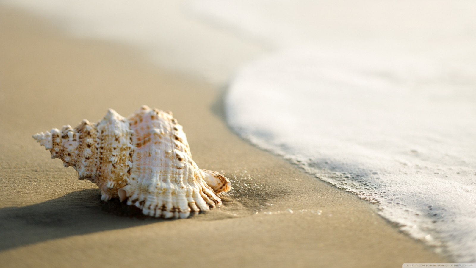 Shell Wallpapers and Background Images   stmednet 1600x900