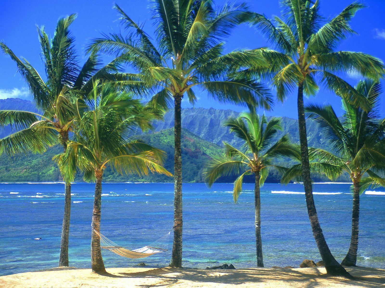 Palm Tree Desktop Wallpapers 1600x1198