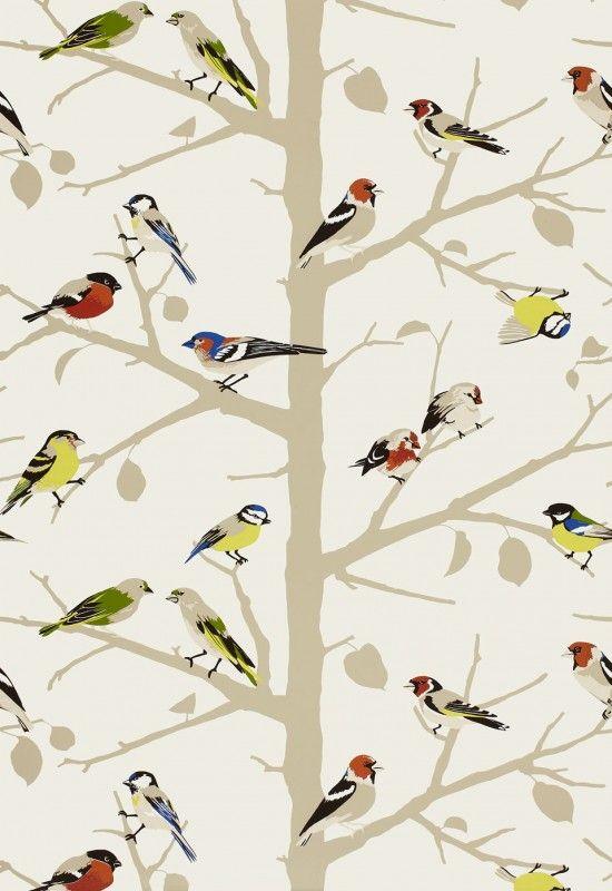 bird wallpaper 550x800