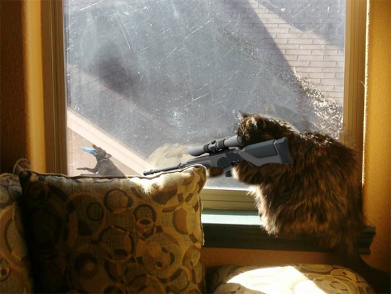 related pictures kitty picture sniper kitten cat holding rifle saying 550x413