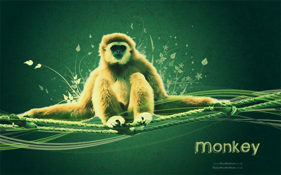 Monkey Desktop Backgrounds 578x361