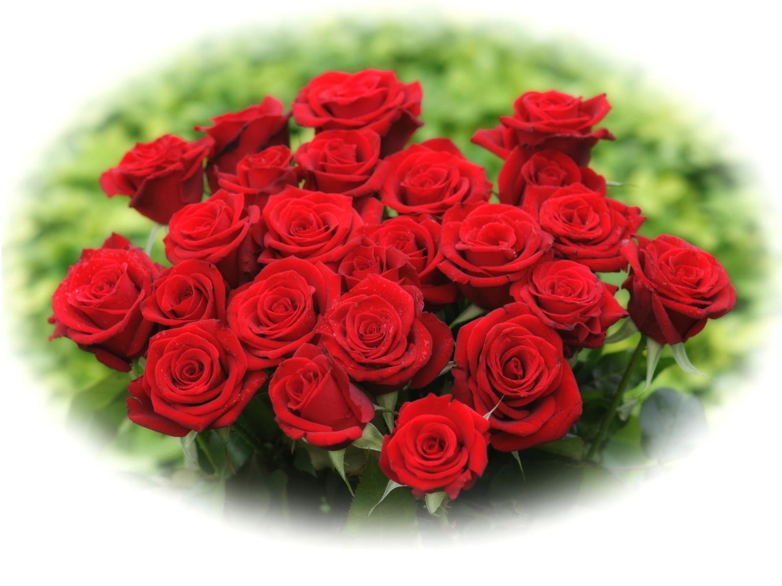 Beautiful red rose wallpaper wallpapersafari - Beautiful red roses wallpapers desktop ...