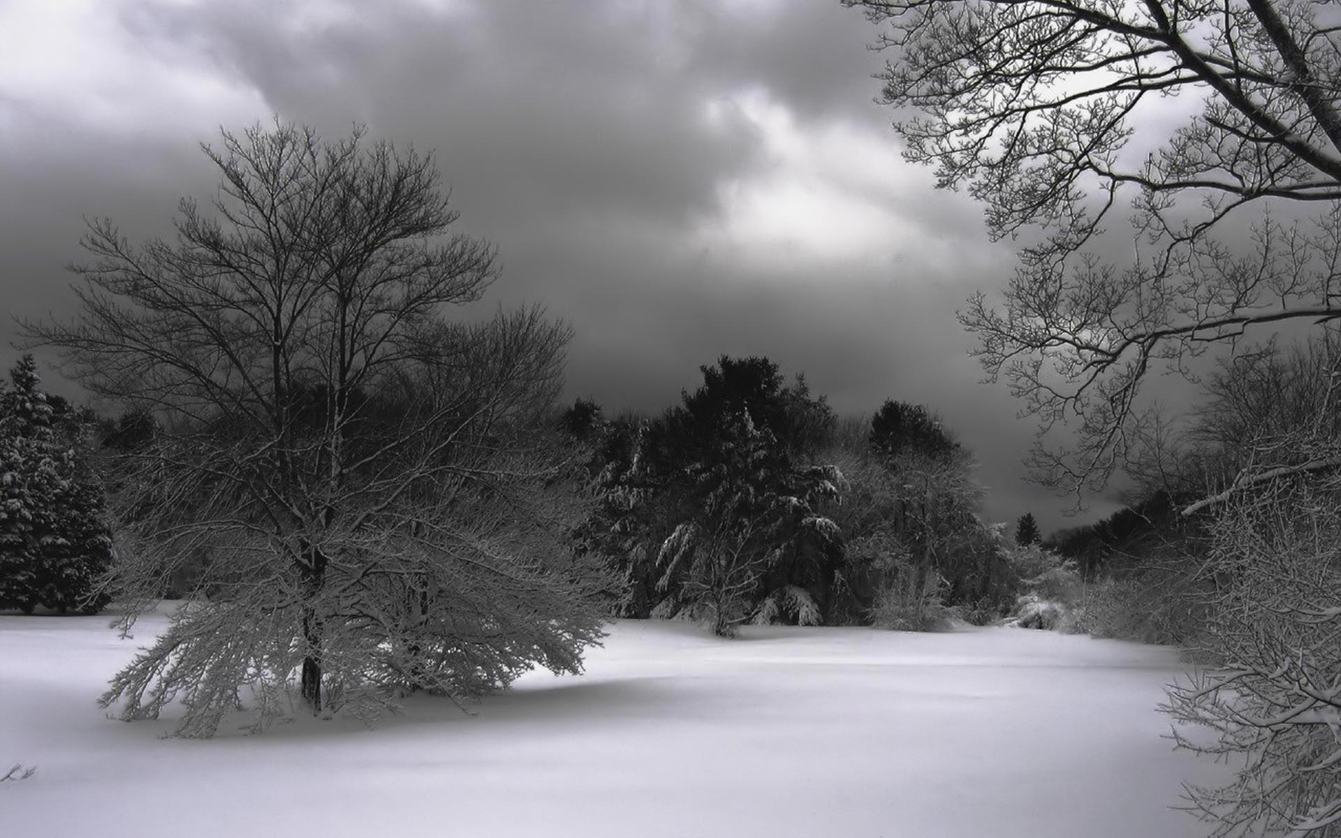 Widescreen HD Wallpaper Nature Flowers Winter Night hd 1920x1200