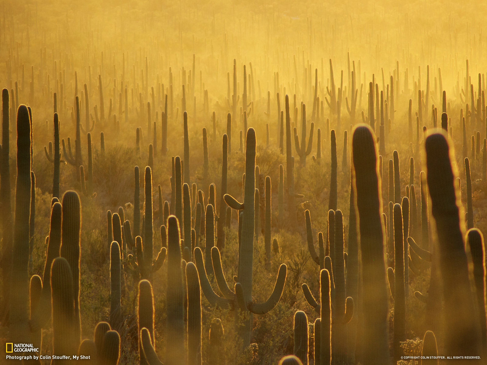 Best 41 Saguaro National Park Wallpaper on HipWallpaper 1600x1200