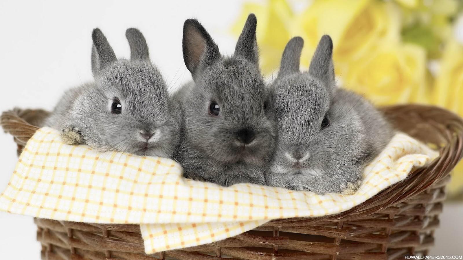 Cute White Rabbit Wallpapers For Desktop: Rabbit Wallpapers For Desktop
