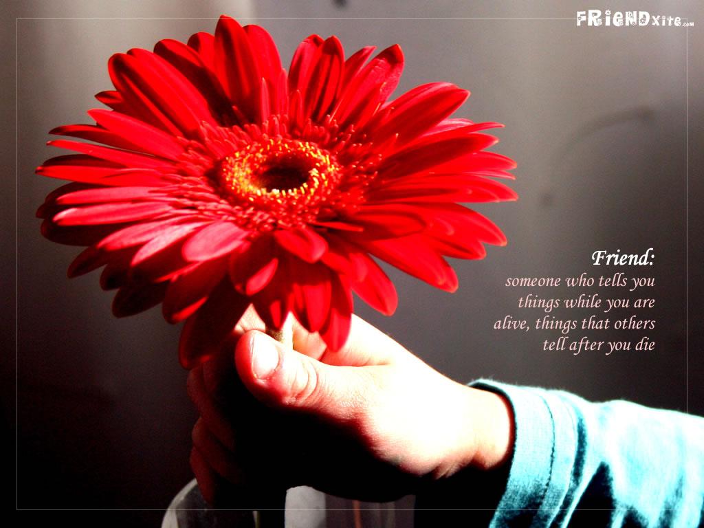 Download Friendship wallpaper 1024x768