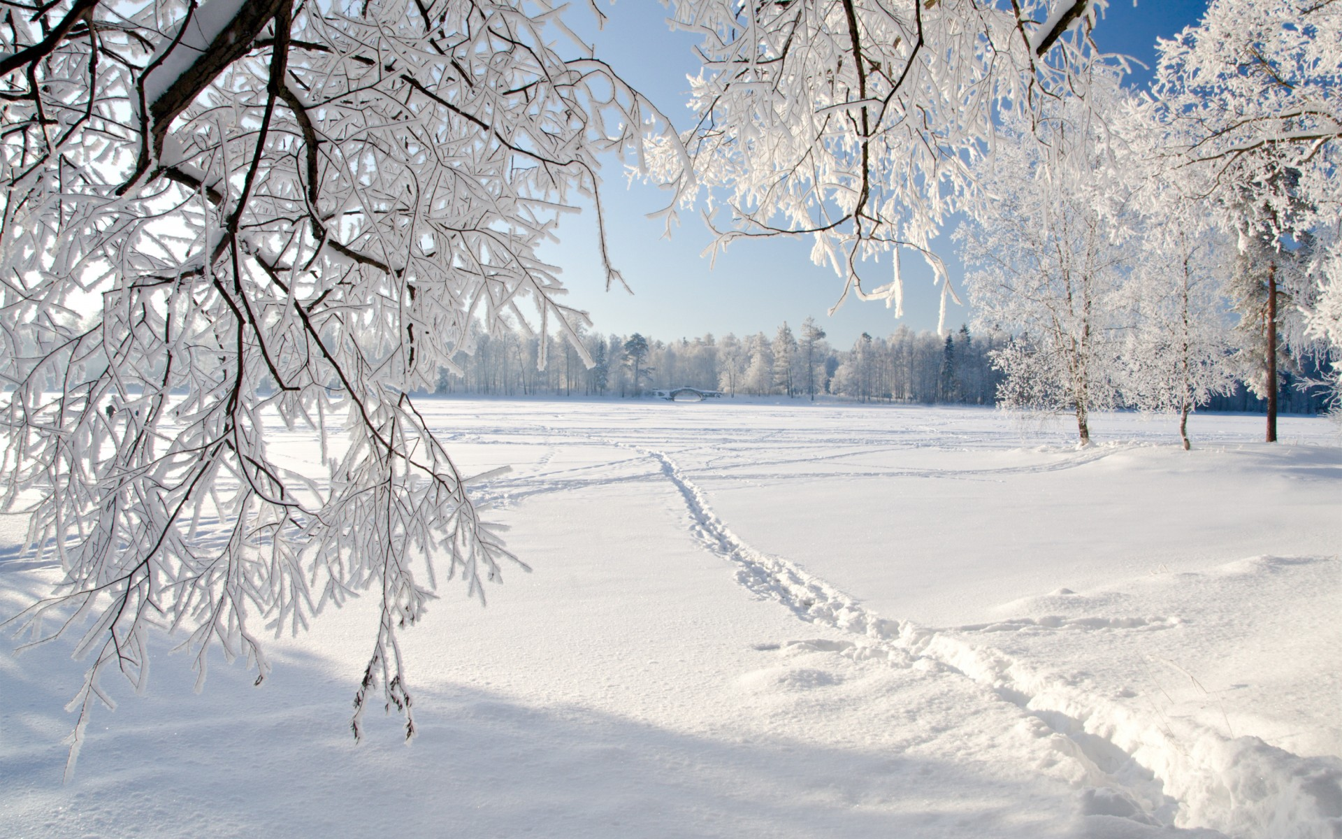 Snowy Trees Winter HD Wallpaper 1920x1200