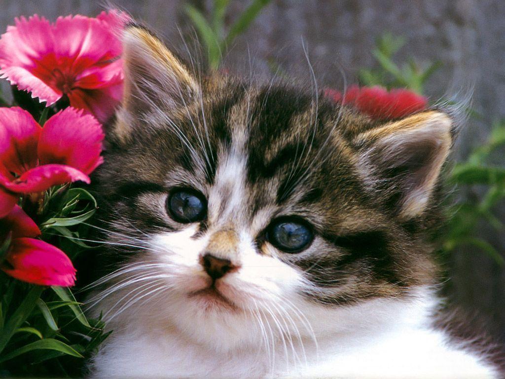 Cute Kitten Wallpapers 1024x768