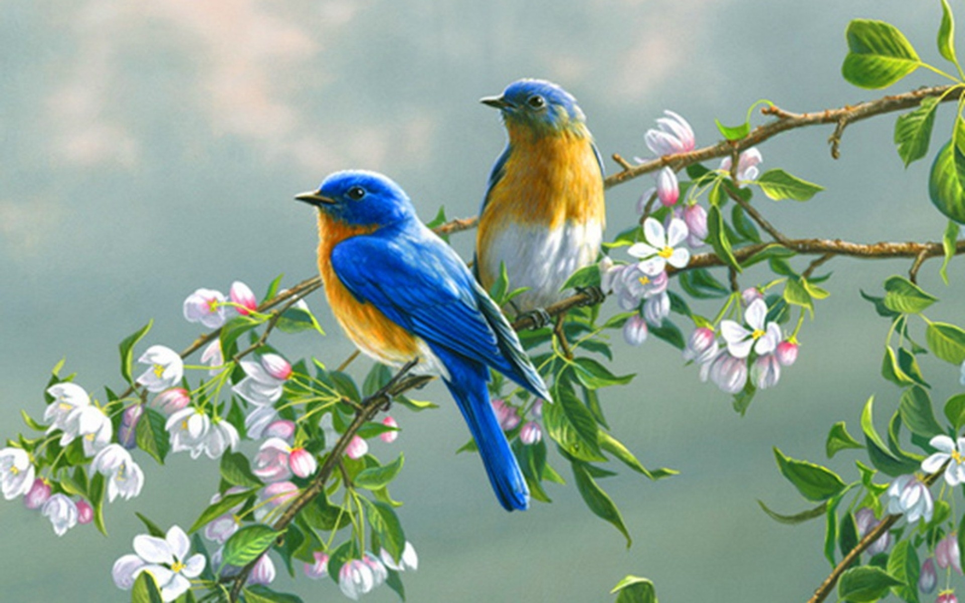 Birds Branches Blossoms wallpapers Birds Branches Blossoms stock 1920x1200