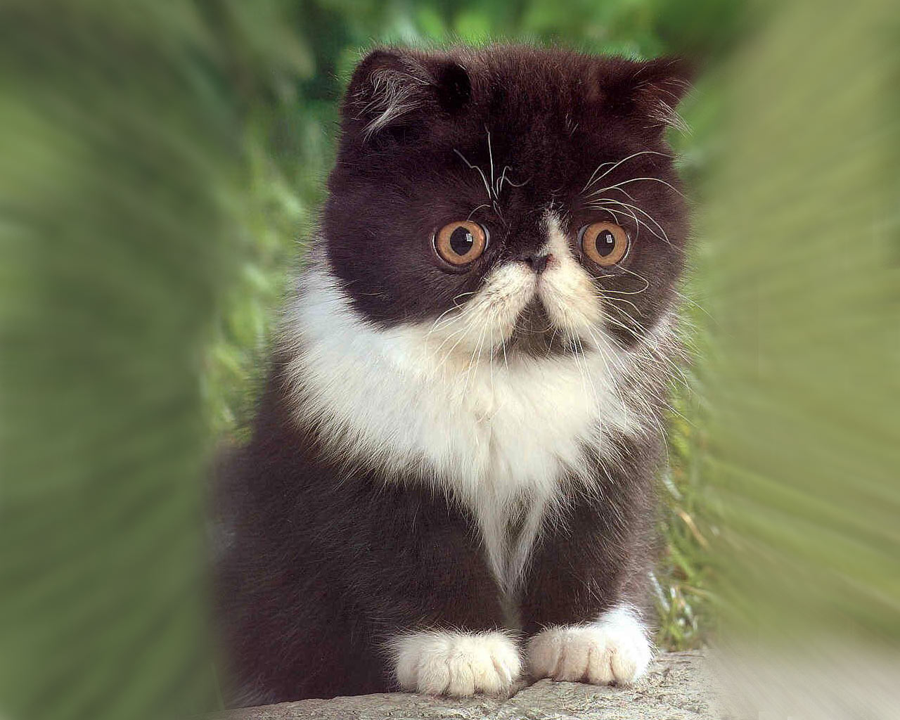 Cute Kittens   Pictures   The Wondrous Pics 1280x1024