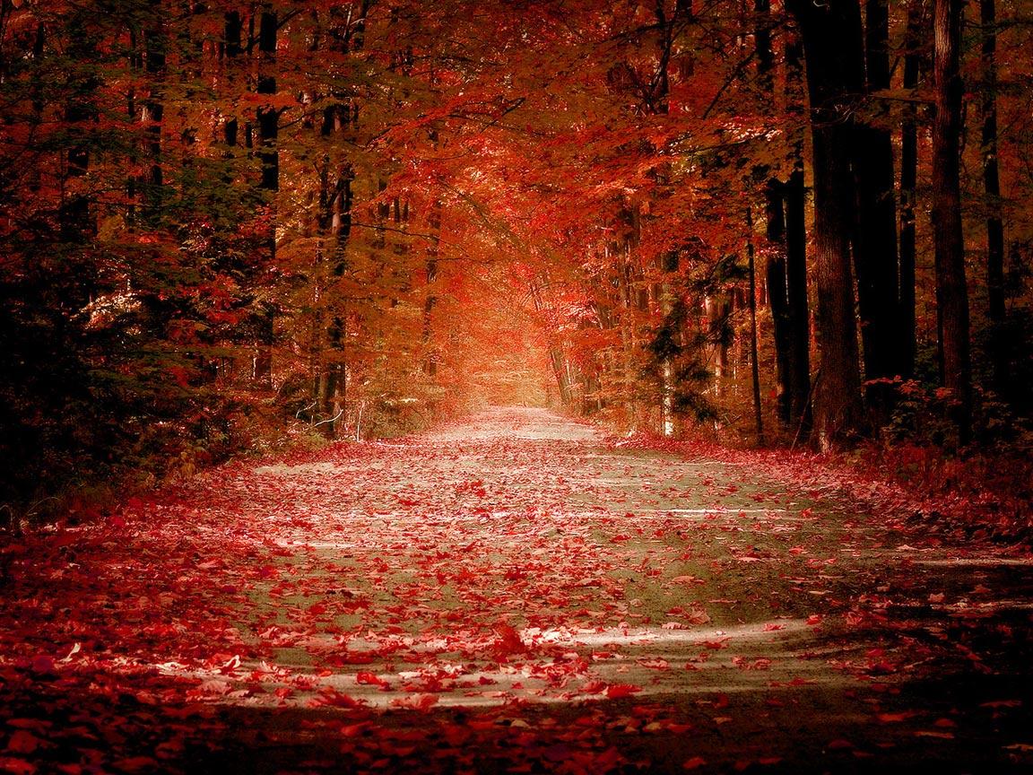 autumn wallpaper widescreen autumn forest wallpaper autumn wallpaper 1152x864