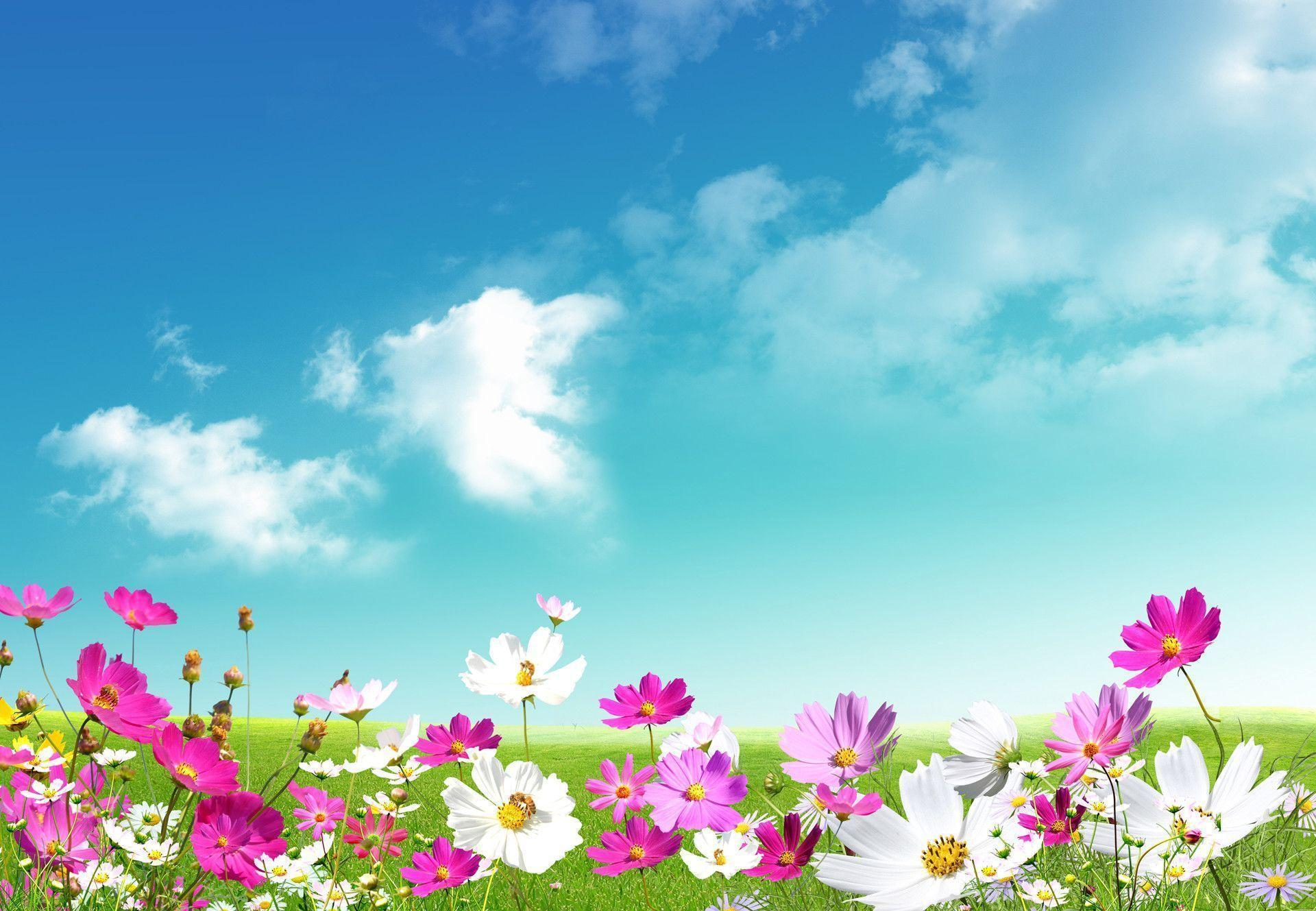 Spring Desktop Wallpaper Backgrounds 1920x1329