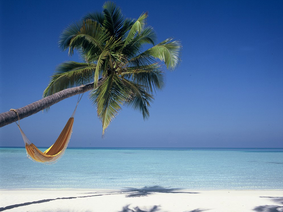 Palm Tree Beach Wallpaper image gallery 1152x864