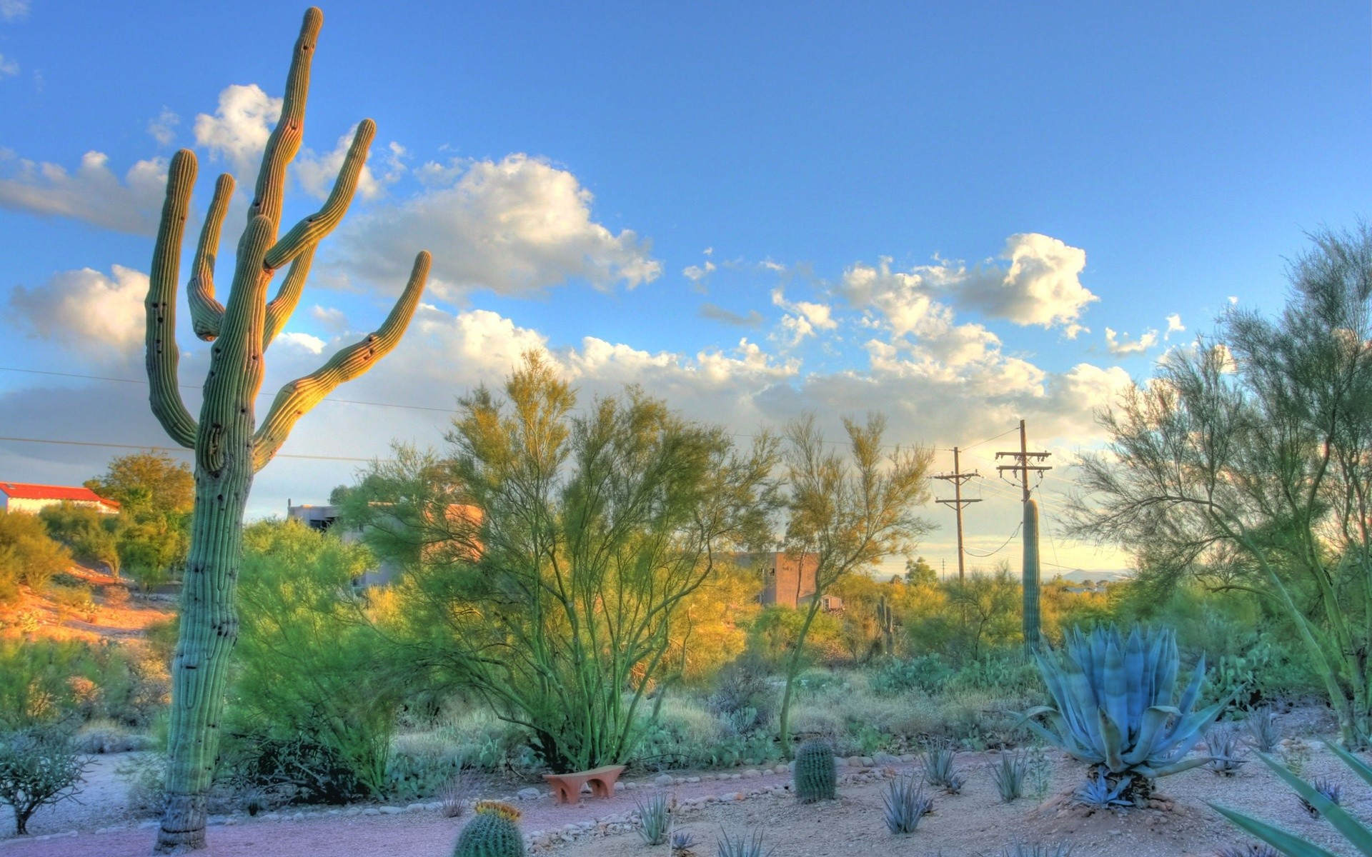 Desert Arizona Wallpaper 1920x1200 Desert Arizona Cactus Tucson 1920x1200