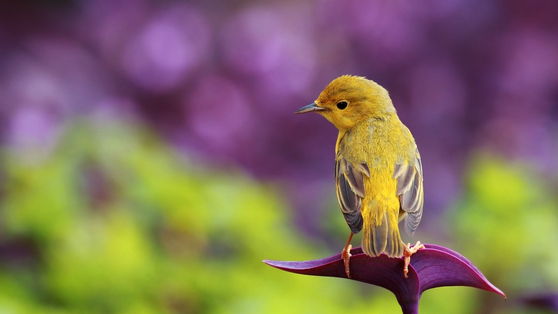 Wallpapers Backgrounds   eye catching birds wallpapers picsnwall 1920x1080