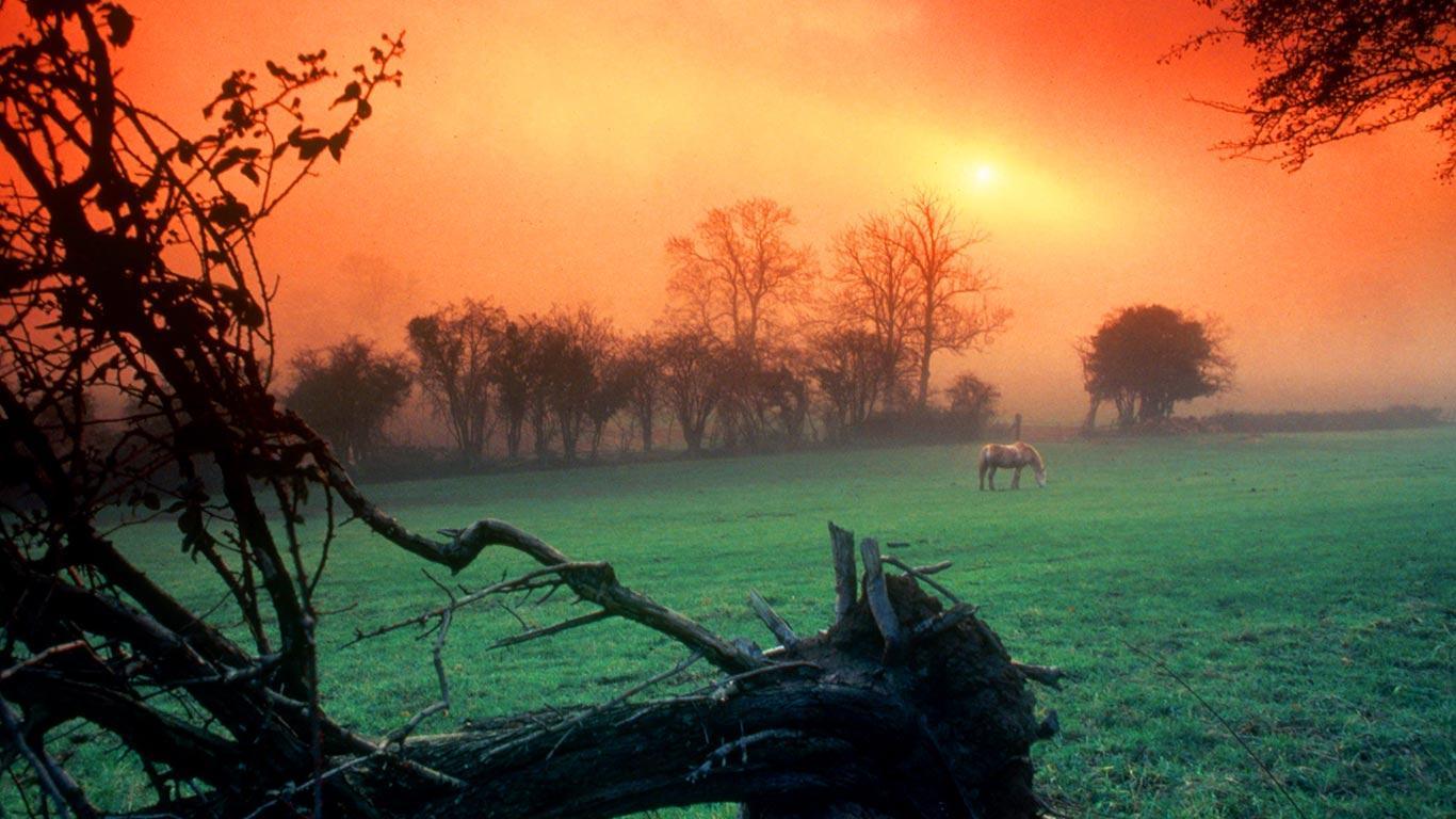 Bing Images   Swansea Sunset   Sunrise over a meadow near Swansea 1366x768