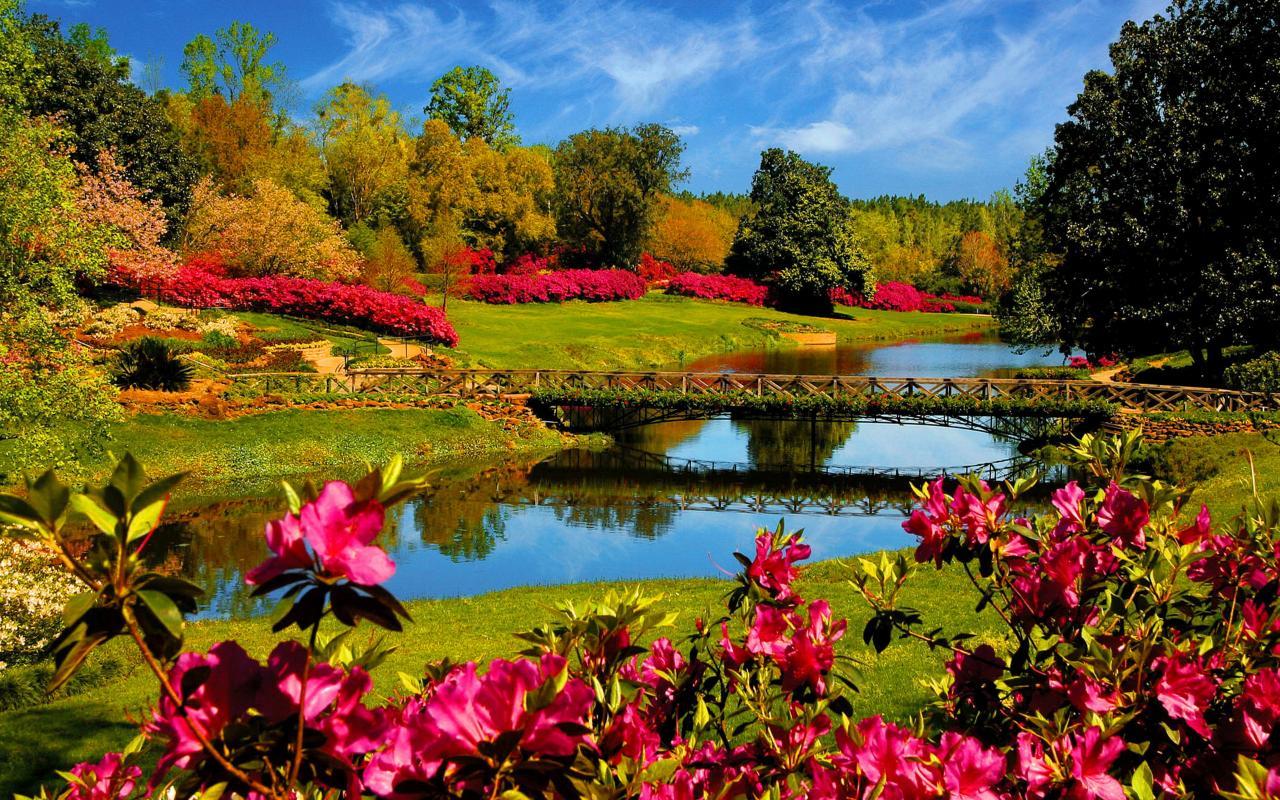 Spring Flower Wallpaper Desktop For Desktop 1280x800