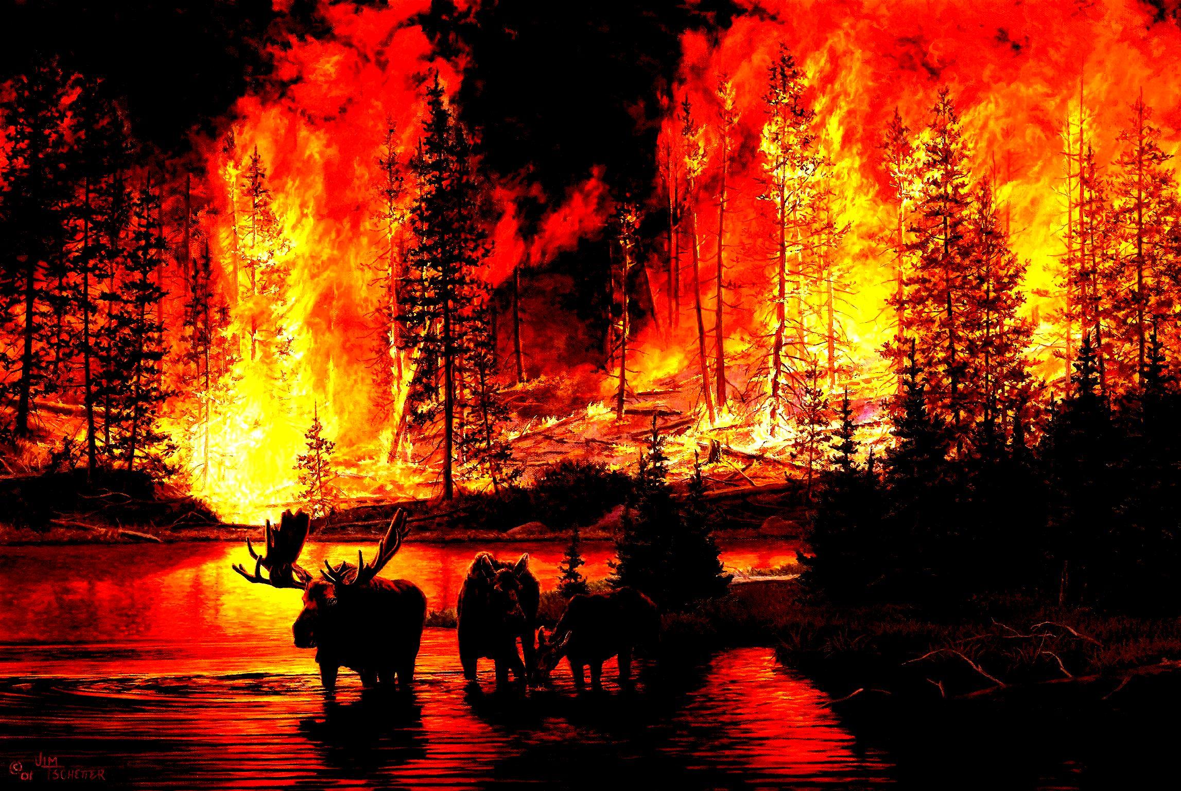 Forest Fire Wallpaper Wallpapersafari