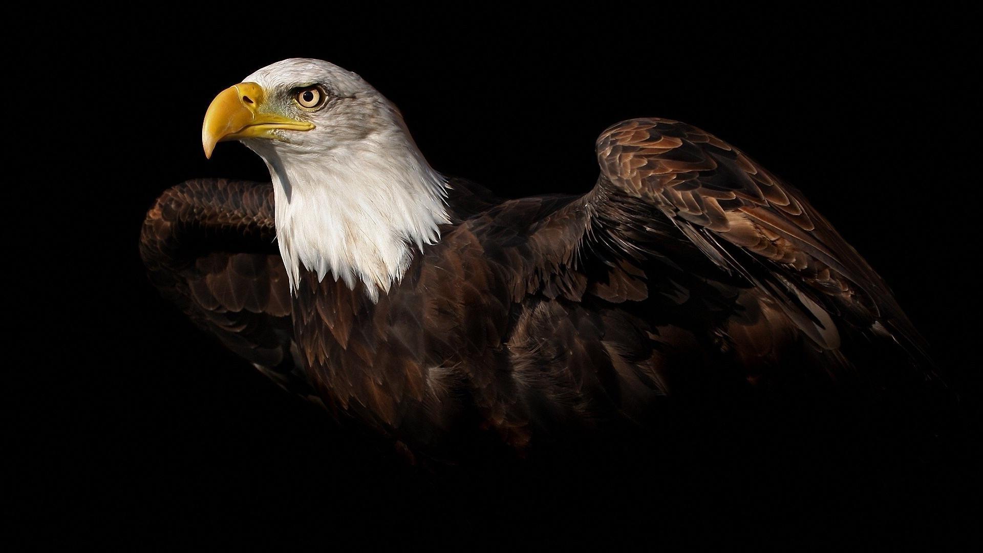 High Resolution Eagle Wallpaper