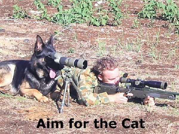 Funny Cat With Sniper Images Pictures   Becuo 600x450