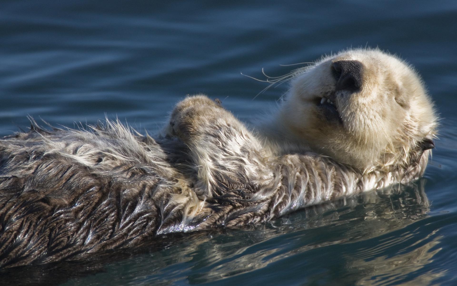 cute otter wallpaper 782877 otter wallpaper 864798 otter wallpaper 1920x1200