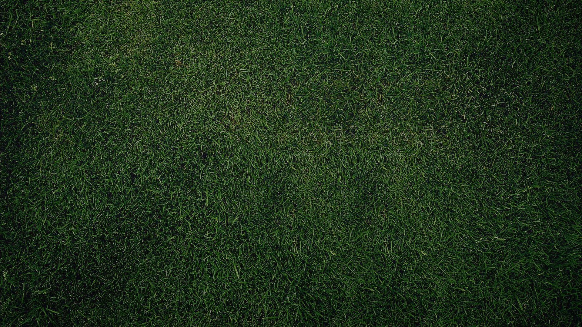 Hd Grass Wallpaper - WallpaperSafari