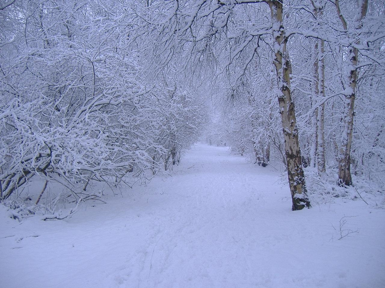 Winter scene Wallpapers Images and nature wallpaper Winter scene 1280x960
