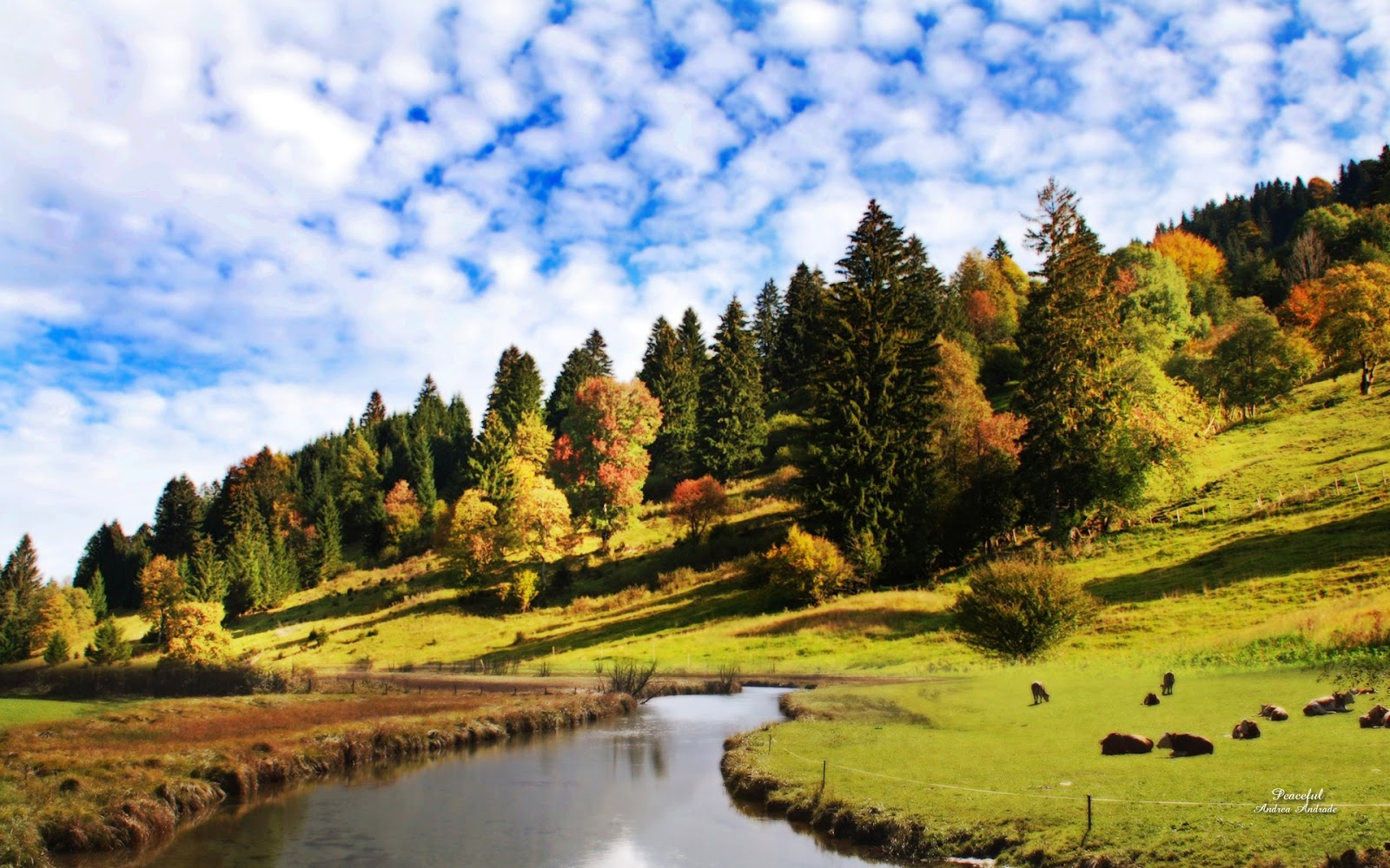 3D HD WALLPAPERS: BEAUTIFUL NATURE HD WALLPAPERS 1080p