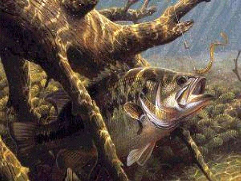 Pin Largemouth Bass Wallpaper 800x600