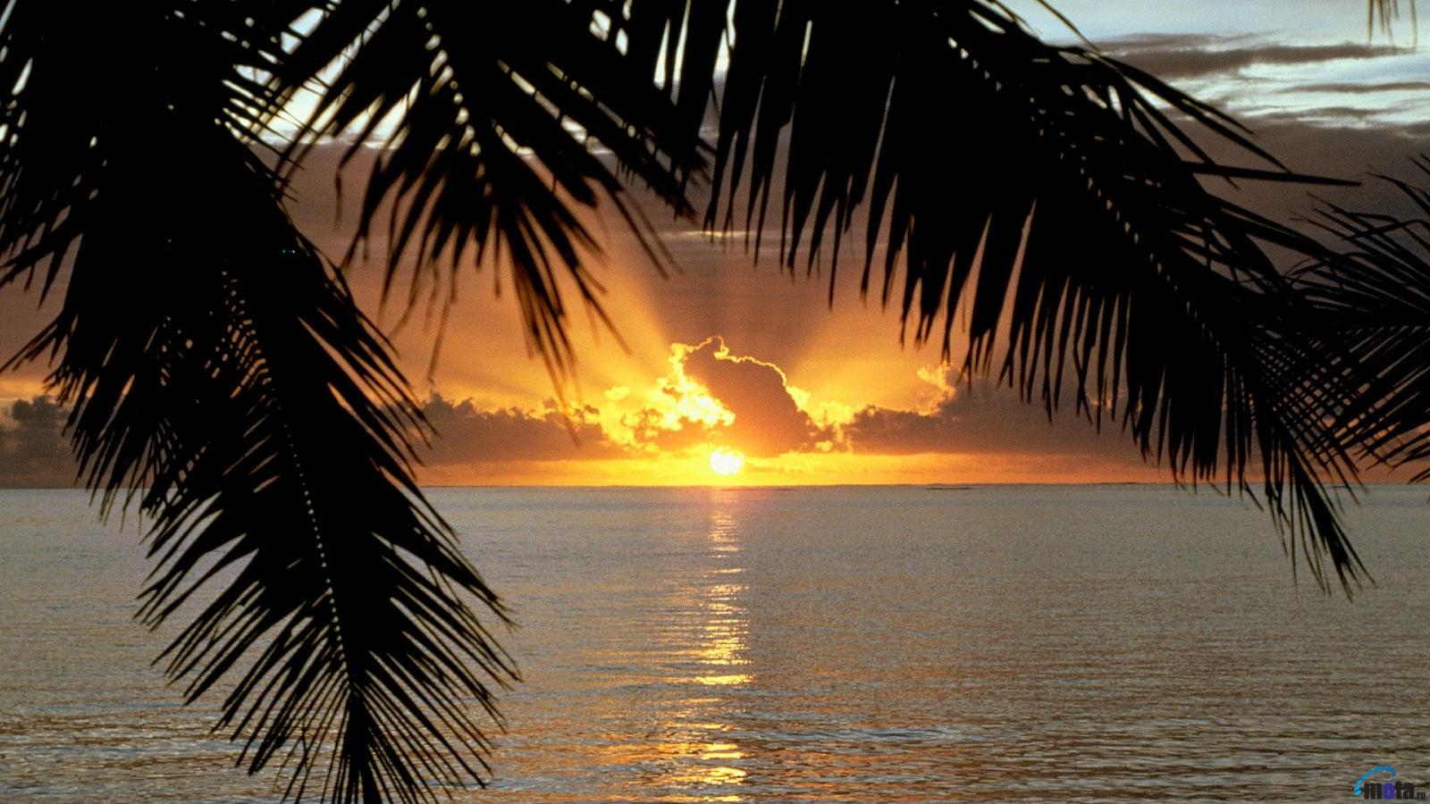 Download Wallpaper Tropical sunset and palm leaves 1600 x 900 1600x900